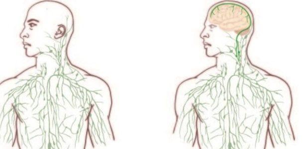 Cientistas fazem descoberta revolucionária na anatomia do cérebro