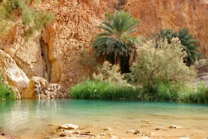 http://www.travelingmyself.com/wp-content/uploads/2013/05/Chebika-Desert-Oasis.jpg